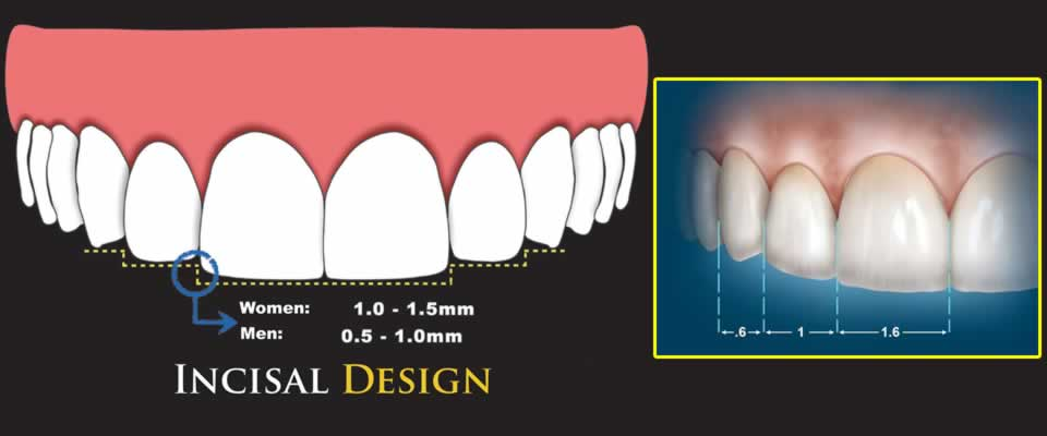 Cosmetic dentistry Ratio Principles